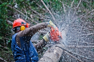 Stourbridge Tree Surgeons, Birmingham Tree Surgeons