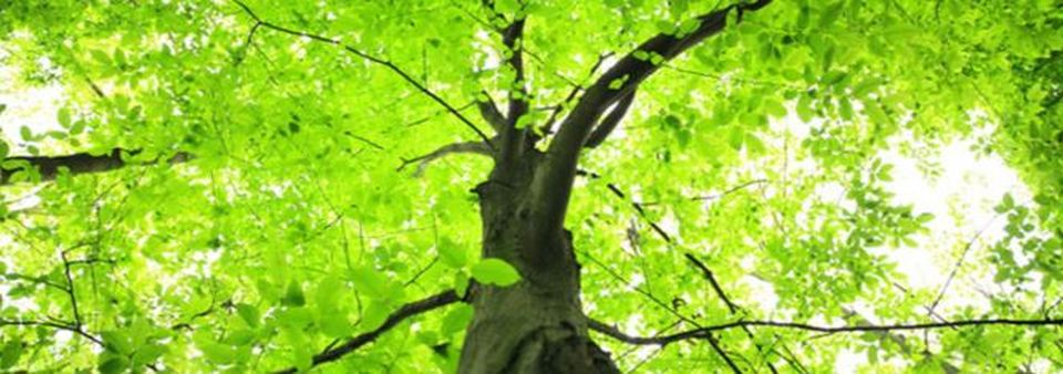 Birmingham Tree Surgeons, Tree Care, Tree Services, Birmingham Tree Services
