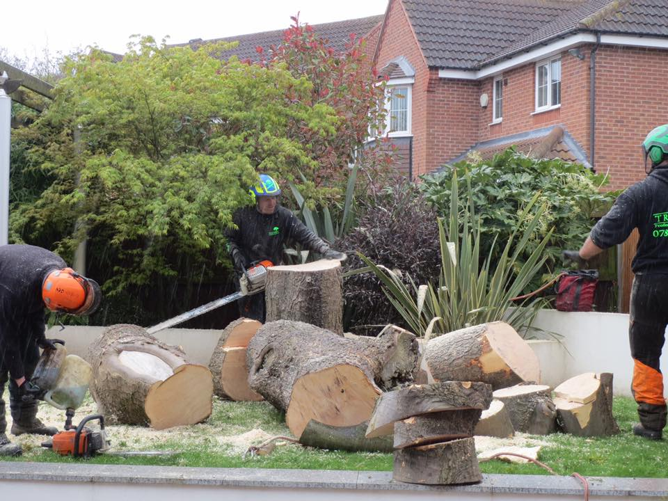 Chopping up a huge log tree in Wolverhampton, Wolverhampton Tree Surgeons