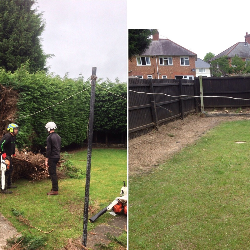 Removing a row of trees in Wolverhampton, Wolverhampton Tree Service